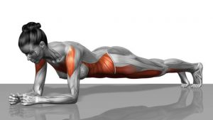 forearm plank from a.msn.com