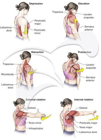shoulder rotations diagram